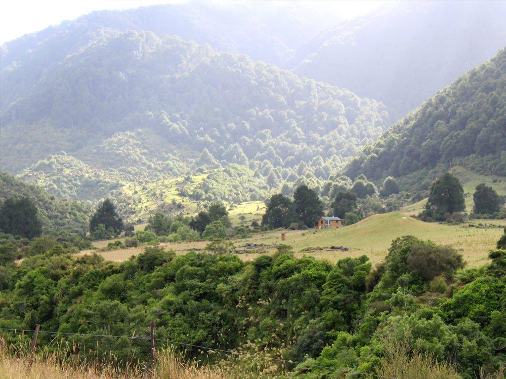 Te Henga Hunting NZ
